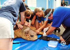 Clearwater Marine Aquarium collaborates on scientific research to better understand animal behavior, illness, treatment and endangered species protection.