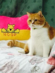 Hoop---pooh