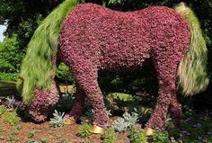 Paard gemaakt van bloemen en planten... Bijzonder!