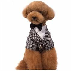 #CET Domain               #Everything ElseWholesale Lots                      #Chidori #Geshe #Fancy #Shirt #Cute #Dress #Clothes #Online #Store #Chidori #Geshe #Fancy #Shirt #Cute #Dress #Clothes #Online #Store-Size                  Chidori Geshe Fancy Bow Tie & Shirt For Cute Dog Dress & Pet Clothes Online Store Chidori Geshe Fancy Bow Tie & Shirt For Cute Dog Dress & Pet Clothes Online Store-Size L                                      http://www.snaproduct.com/product.aspx?PID=7882269