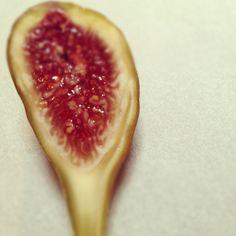 Fig. Photo by shelleylindgren