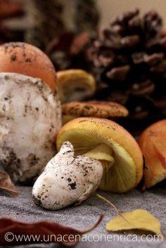 funghi ovuli