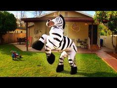 That zebra is dope! #rhettandlink