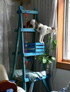 Trendy upcyclers will love this painted old ladder-come-stylish pet perch… | Community Post: 7 Amazing DIY Cat Dens… Are These Fur-Real?