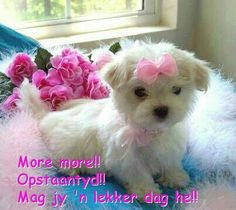 Pretty in Pink Puppy cute animals pink dog puppy cute animals Little Puppies, Cute Puppies, Cute Dogs, Dogs And Puppies, Doggies, Funny Dogs, Baby Animals, Cute Animals, Teacup Puppies