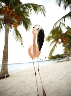 "juhae: "" "" In Aruba at Renaissance Island I was pleased to meet an inquisitive flamingo who wasn't camera shy at all. Shooting outside one's normal parameters can be both relaxing and rewarding. –..."