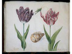 Oude Botanische Prenten : Oude hortus universiteitsmuseum utrecht