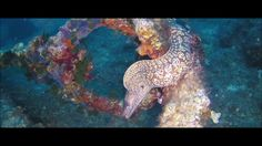 La danza dei Barracuda - Siracusa - Sicily - Diving