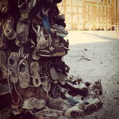 The Murray State University Shoe Tree--- Mine and Canaan's shoes are the bottom right black flip flop and shoe next to it! Kentucky Colonel, Black Flip Flops, Shoe Tree, Ways Of Seeing, Winter Trees, State University, Make Me Smile, Life Is Good, The Good Place