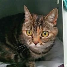 Angel - Cat Rehoming & Adoption - Wood Green Animals Charity