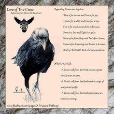 Crow lore