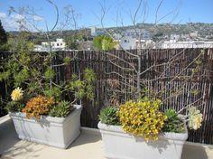 Rooftop Mahogany Bamboo Friendly Fence
