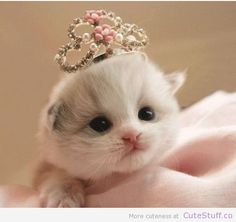 baby, fashion, cat, love, blance, couronne, princess
