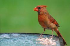 northern bird