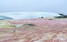 Jacqueline Deely Photography Blog: The Antarctica you did not know!