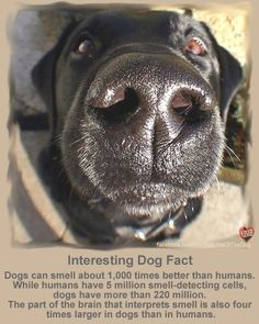 Great fact about #dog.