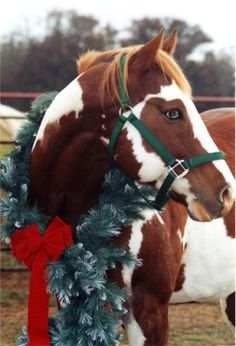 Christmas Horse Picture.What a pretty horse!