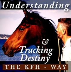 Klaus has shaken up the international horse world. He is at the forefront of new ideas on working and interacting with horses and transmitting these insights towards general human issues. Horse World, Ferdinand, Beautiful Horses, Coaching, Knight, Management, Hero, Business, Nature