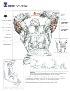 Tricep Extensions - AKA Skull Crushers ~ Re-Pinned by Crossed Irons Fitness