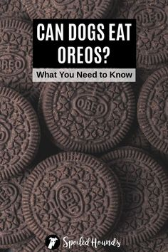 Can dogs eat Oreos? Keep your dog safe and find out what you need to know about dogs eating Oreo cookies and ice cream. #dogsafety #doghealth #dogs #doglovers #doginformation #dogownertips #pethealth #oreos #oreoicecream Oreo Cookies, Dog Cookies, Can Dogs Eat Strawberries, Strawberries And Cream, Can Dogs Eat Lemons, Can Dogs Eat Pumpkin, Strawberry Oreos, Lemon Oreos, Your Dog
