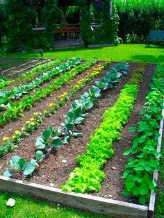 Veggie Garden backyard-ideas