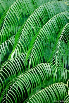Rainforest Flora Photo, Stock Photo of Costa Rica