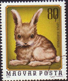 European hare   Hungary postage stamp, 1974