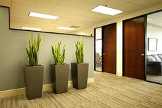 Office Plants Pots like these could keep the dogs out!
