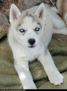 Beautiful blue eyes!