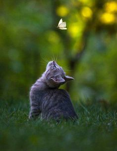 Cat with butterfly...
