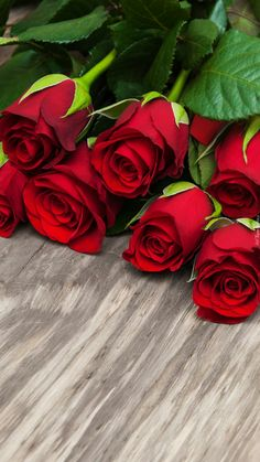 31 new Ideas for wall paper rosa rojas red roses Beautiful Flower Drawings, Beautiful Rose Flowers, Beautiful Flowers, Rose Flower Wallpaper, Flower Backgrounds, Red Rose Bouquet, Good Morning Flowers, Belle Photo, Pink Roses