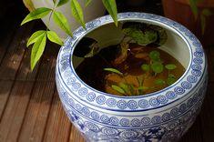 睡蓮鉢 ビオトープ