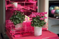 pink dishwasher, cheerful!