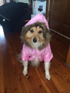 The look of death my dog gave as she got dressed up! http://ift.tt/2shK4wD