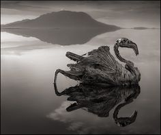 Deadly lake turns animals into statues..Mother nature's diversity makes me wonder every now and then