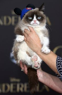 """Grumpy Cat attends the premiere of Disney's """"Cinderella"""" at the El Capitan Theatre on March 1, 2015 in Hollywood, California. #GrumpyCat #Tard #TardarSauce #Cat #Cats"""