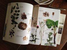 build your own Materia medica and apothecary