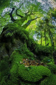 The root and trunk become one, after an eternal association.