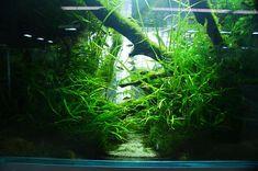 Nature Aquarium Gallery 2 : ZERO-AQUA