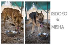 Isisdoro e Misha, rifugio di Crocchetta, foto di Maggie Gometz