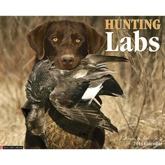 Hunting Labs Wall Calendar: A stunning, full-color tribute to Labs in action across the marshes, forests and prairies of North America. The full-color, large format wall calendar features daily grids with ample room for jotting appointments, birthdays and reminders.  $13.99  http://calendars.com/Labrador-Retrievers/Hunting-Labs-2013-Wall-Calendar/prod201300002938/?categoryId=cat10086=cat10086#