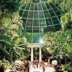 Serres royales de Laeken - The King's greenhouses
