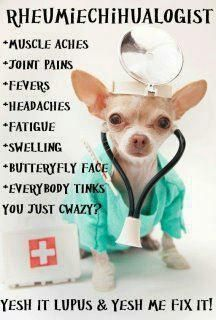 Not just for lupus... but scleroderma too and my baby loves chihuahuas too.. perfect lol