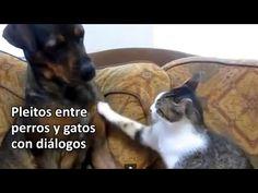 Perros y gatos pelean con diálogos graciositos: http://ramrock.wordpress.com/2014/07/30/gatos-perros-animalitos-bichos-la-leche-son-la-leche/