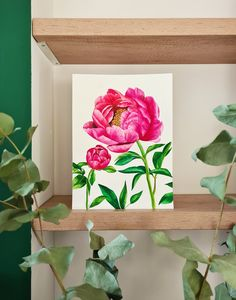 Peony watercolor illustration by Studio Sonate Watercolor Illustration, Peony, Studio, Frame, Plants, Vintage, Instagram, Design, Home Decor
