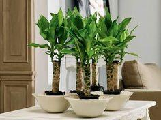 Las 10 plantas que purifican el ambiente del hogar.