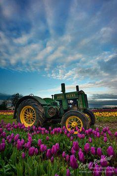 A beautiful morning at the Wooden Shoe Tulip Farm in Woodburn, Oregon.