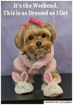 Some of the things we adore about the Yorkshire Terrier Pup Cute Puppies, Cute Dogs, Dogs And Puppies, Photo Humour, Top Dog Breeds, Yorkie Puppy, Baby Yorkie, Yorkshire Terrier Puppies, Lap Dogs