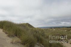 Title  Walking The Dunes   Artist  Belinda Greb   Medium  Photograph - Photograph, Photography, Photographs