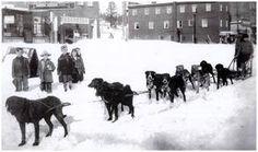 cane da slitta in Alaska.  1900.